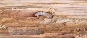 éloignement des insectes Bio Protect