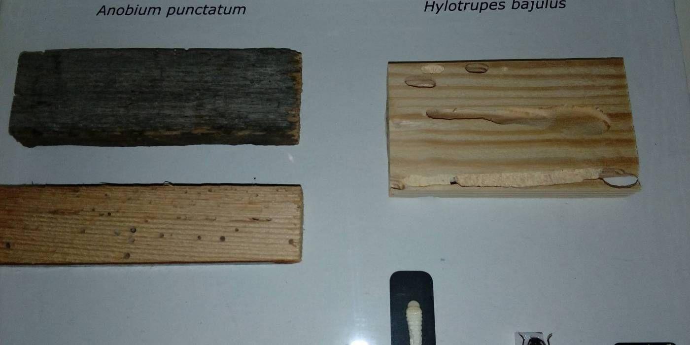 solution contre les insectes de bois