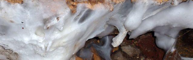 Solution contre les champignons maison