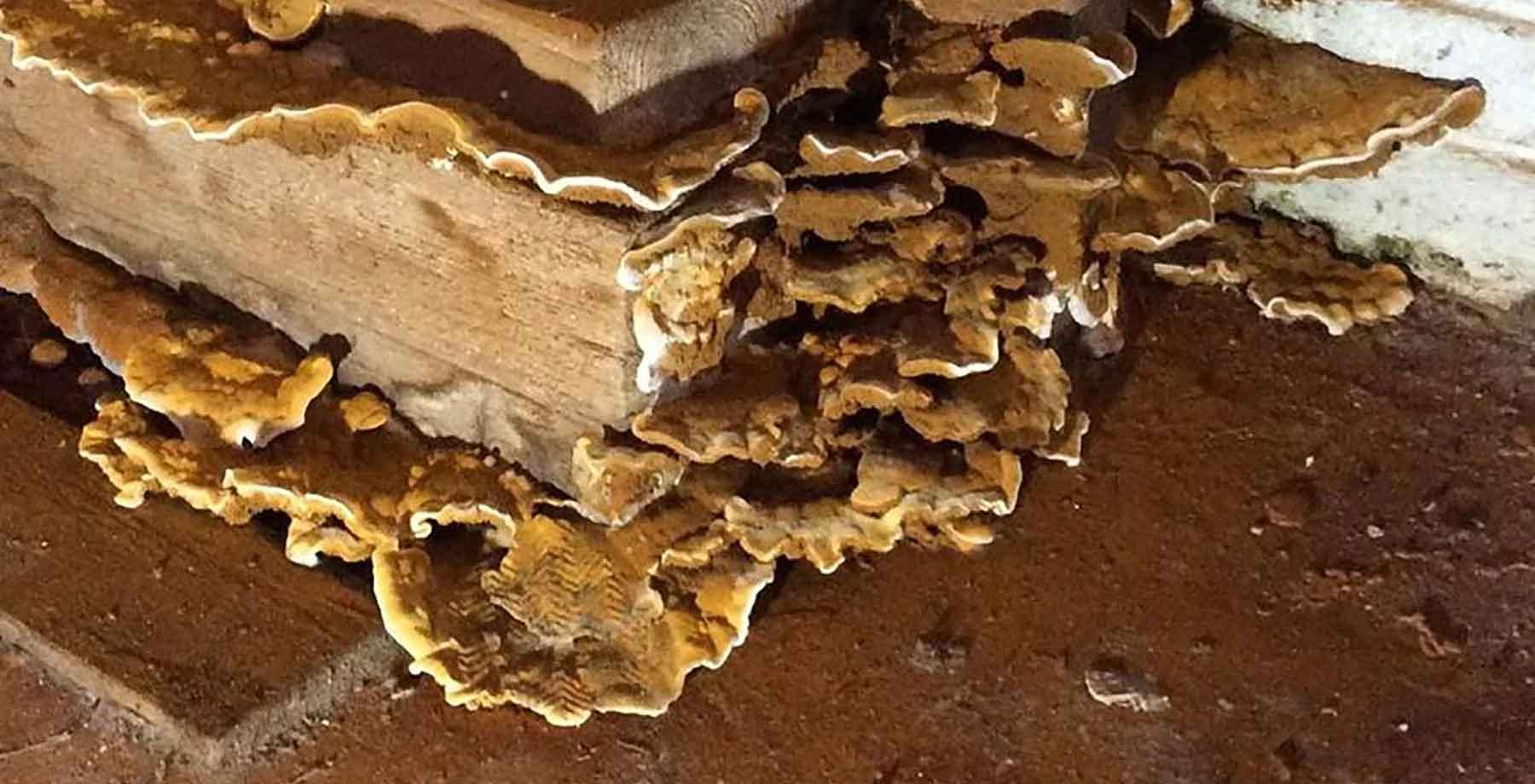 traitement champignons charleroi