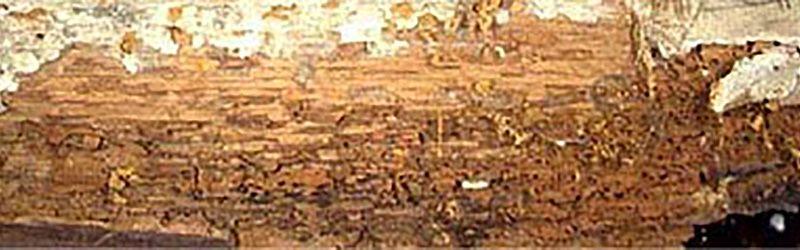 traitement insecte de bois